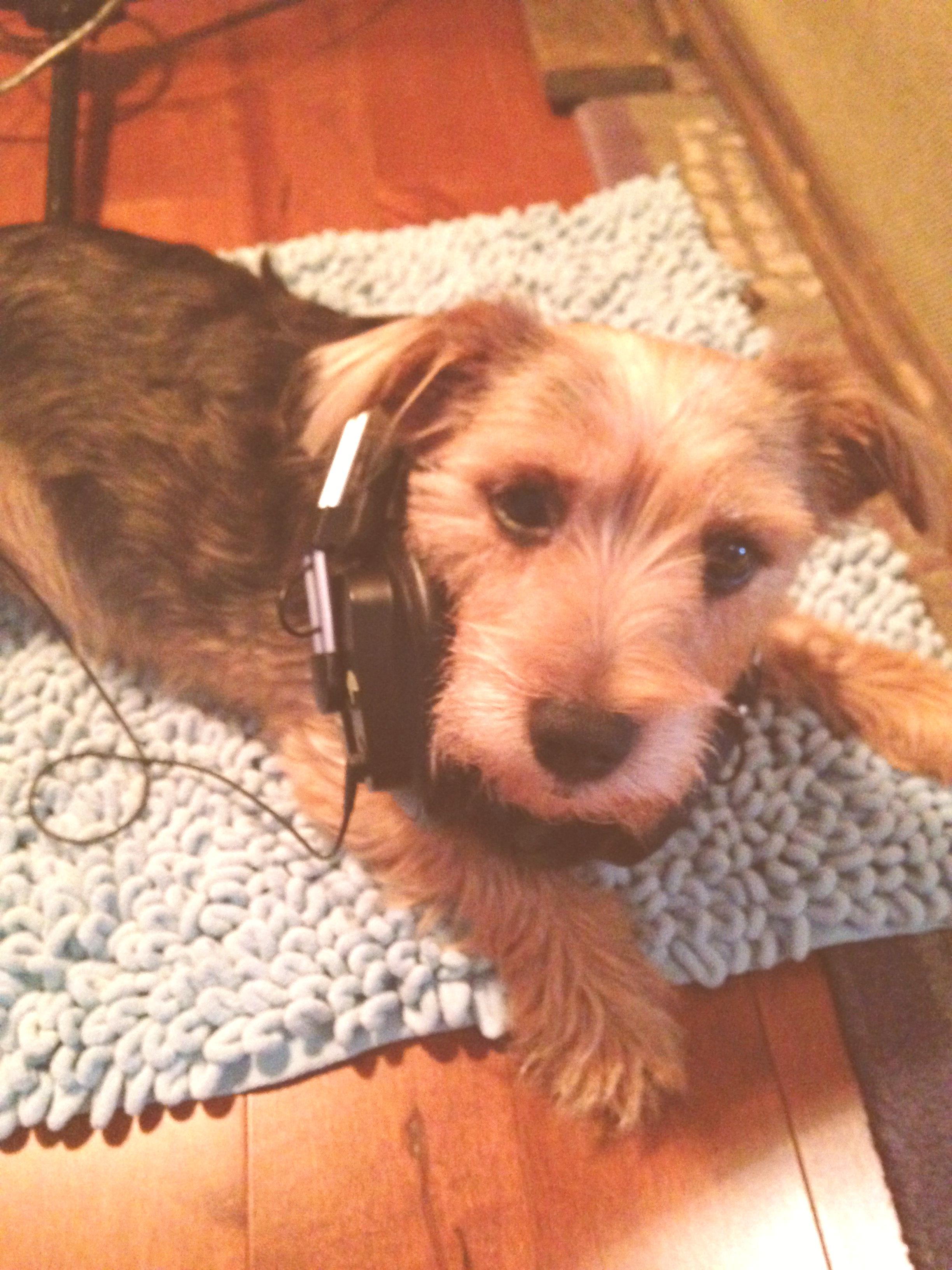 recording vocals, little terrier, Josie, the family dog, wearing headphones