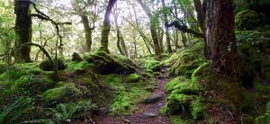 enchanted forest mossy path